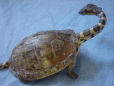 turtlesnake