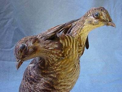 two-headed-bird