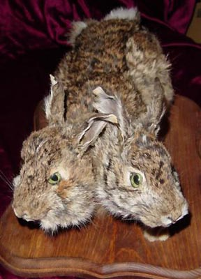 two-headed-bunny