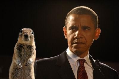 squirrel obama