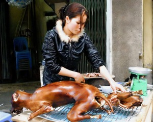 crw_8281_dog_meat