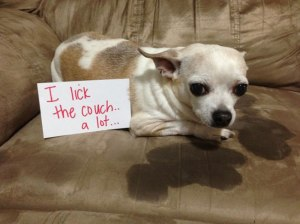 dogs-who-are-shamelessly-proud-of-what-they-just-did-13