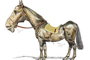 b1-weak-horse_c0-120-2724-1936_s300x200